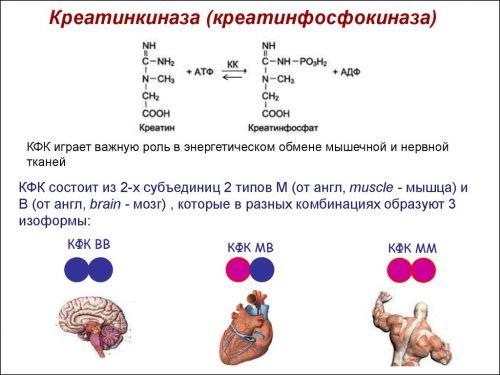 Креатинфосфокиназа