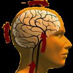 Нейро-циркуляторная дистония