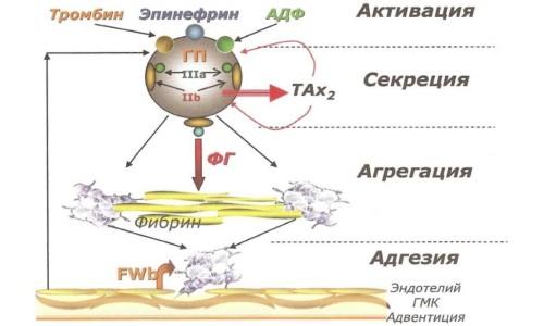 повышении адгезии (склеивания) тромбоцитов