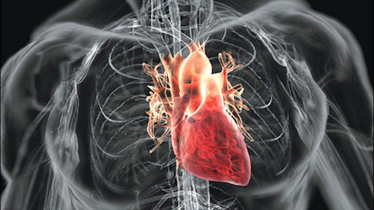 тренировать сердце и сосуды