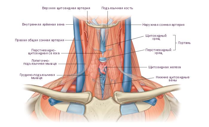 тромбоз яремной вены