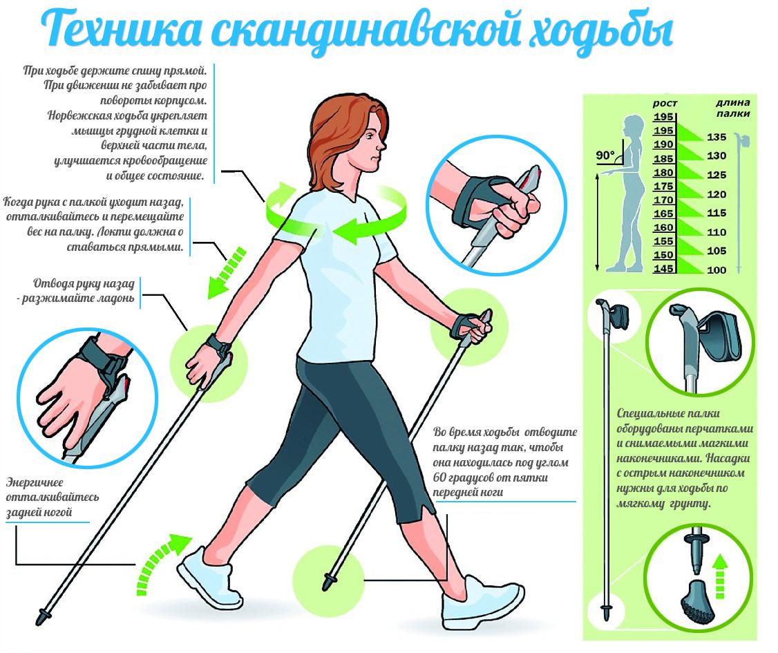 [BBBKEYWORD]. Разные виды ходьбы для похудения. Сколько нужно ходить, чтобы похудеть?