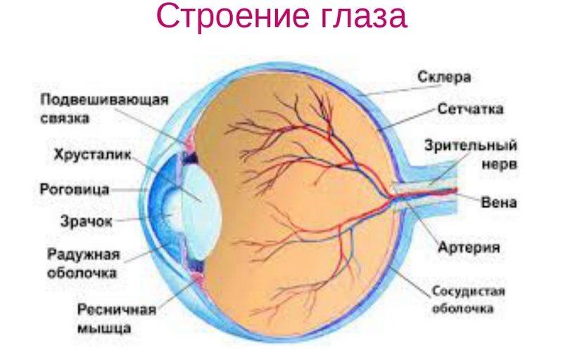 Зрительный анализатор