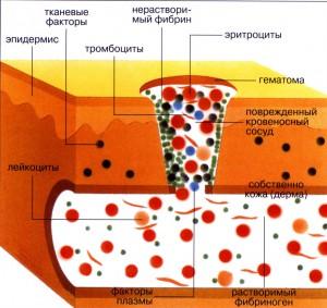 нарушения процессов свертывания крови.