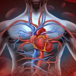 очаг некротических изменений сердечной мышцы