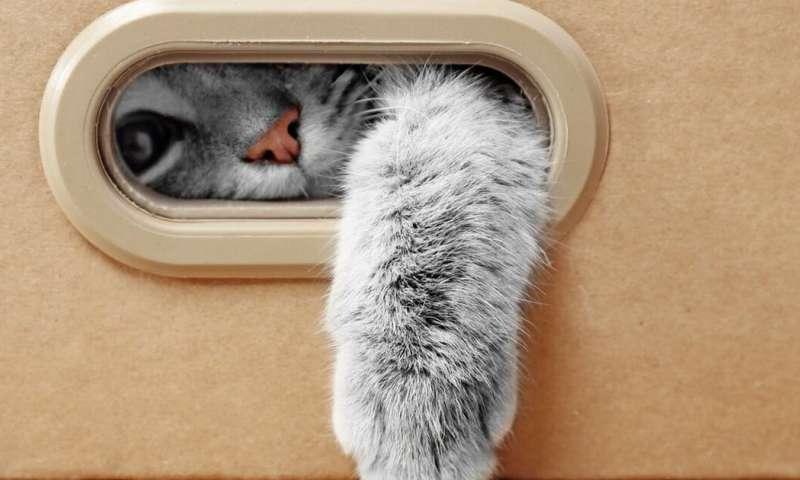 Могут ли кошки действительно получить или передать COVID-19, как предполагает отчет из Бельгии?